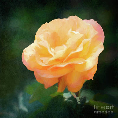Good As Gold Painted Rose Poster
