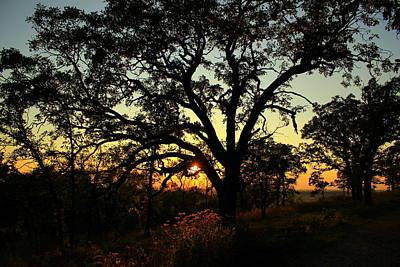 Poster featuring the photograph Good Night Tree by Viviana  Nadowski