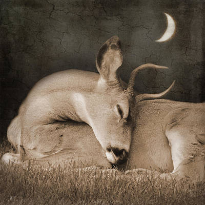 Poster featuring the photograph Goodnight Deer by Sally Banfill