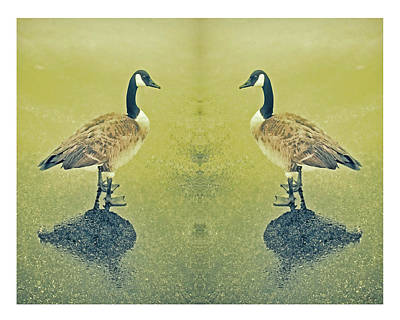 Goose In The Mirror Poster