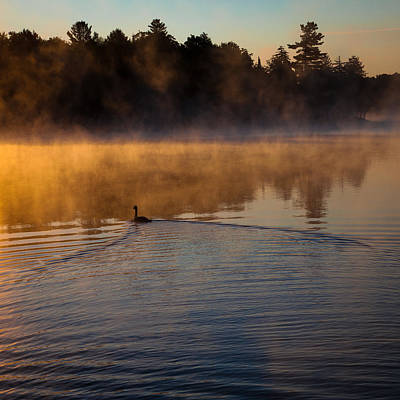 Goose In The Mist On Old Forge Pond Poster by David Patterson