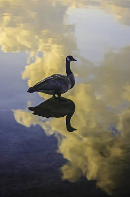 Poster featuring the photograph Goose Silhouette 2 by Sherri Meyer