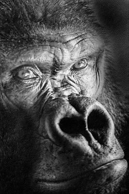 Gorilla On Wood Poster by David Millenheft