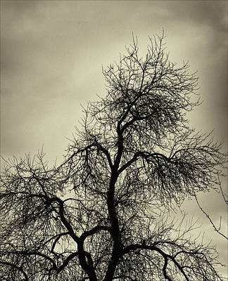 Gothic Tree Poster by Robert Ullmann