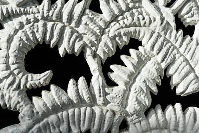 Graceful Black And White Fern Patterns - Take One Poster by Georgia Mizuleva