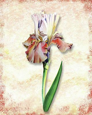 Poster featuring the painting Graceful Watercolor Iris by Irina Sztukowski