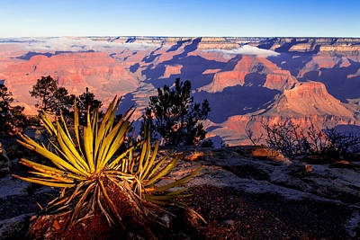 Poster featuring the photograph Grand Canyon 31 by Donna Corless