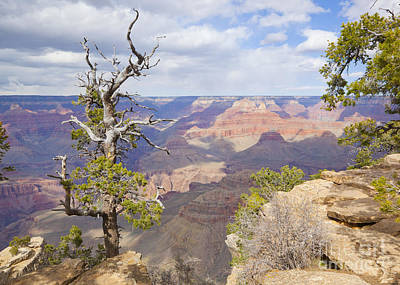Poster featuring the photograph Grand Canyon View by Chris Dutton