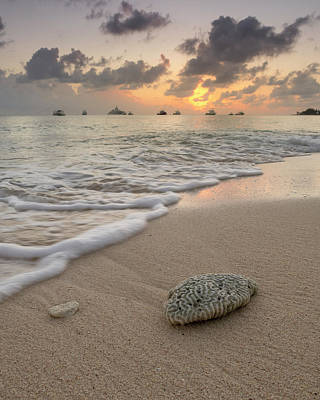 Poster featuring the photograph Grand Cayman Beach Coral At Sunset by Adam Romanowicz