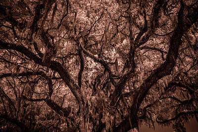 Poster featuring the photograph Grand Daddy Oak Tree In Infrared by Louis Ferreira