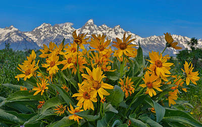 Grand Teton Mountain Range And Wildflowers Poster