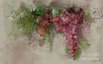 Grape Vine Poster by The Styles Gallery