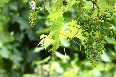 Luscious Grapes Poster by Brian Manfra