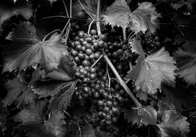 Grapes In Black And White Poster