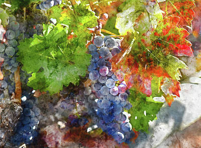 Grapes On The Vine In The Autumn Season Poster by Brandon Bourdages