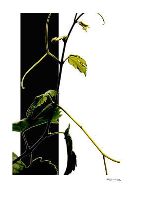 Grapevine Collage Poster