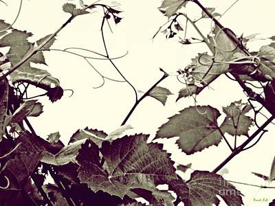 Grapevine In Sepia 2 Poster by Sarah Loft