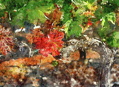 Grapevine In The Autumn Season Poster