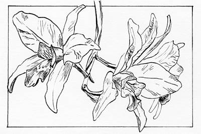 Graphic Orchid Poster by Masha Batkova
