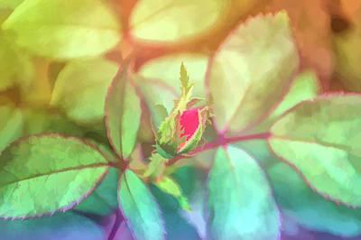 Graphic Rainbow Rosebud Poster