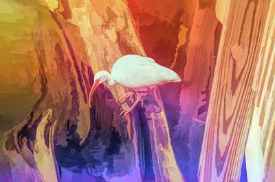 Graphic Rainbow White Ibis Bird Poster