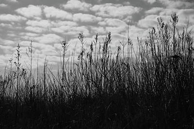 Grass Against The Background Of Clouds Poster by Mariia Kalinichenko