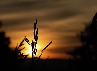 Grass At Sunset Poster