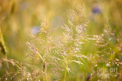Grass Closeup After The Rain Poster