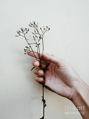 Grass Flowers In Hand. Poster