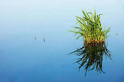 Grass In Blue Poster