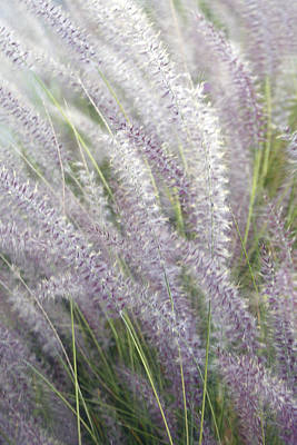 Poster featuring the photograph Grass Is More - Nature In Purple And Green by Ben and Raisa Gertsberg