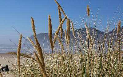 Poster featuring the photograph Grass Seeds On The Beach by Angi Parks