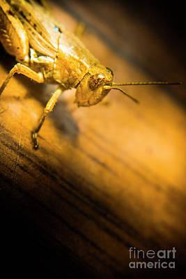 Grasshopper Under Shining Yellow Light Poster by Jorgo Photography - Wall Art Gallery