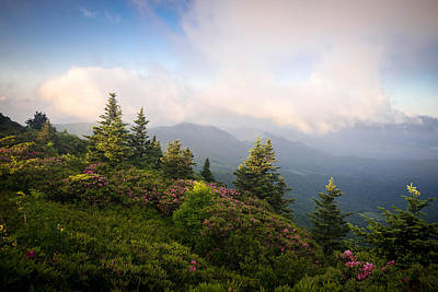 Grassy Ridge Rhododendron Bloom Poster