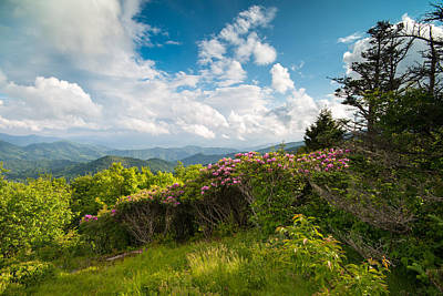 Grassy Ridge Roan Highlands Rhododendrons On The Appalachian Trail Poster