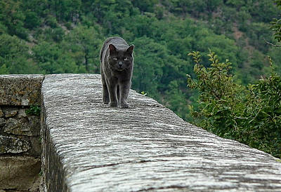 Gray Cat Prowling Poster