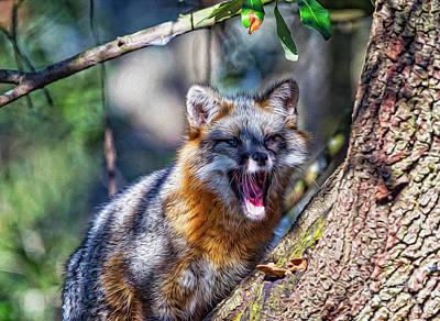 Gray Fox Awakens In The Tree Poster