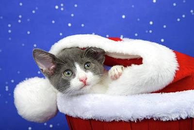 Gray Tabby Kitten Waiting For Santa Poster