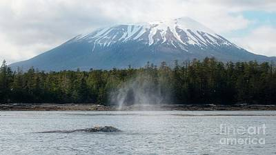 Gray Whale, Mount Edgecumbe Sitka Alaska Poster
