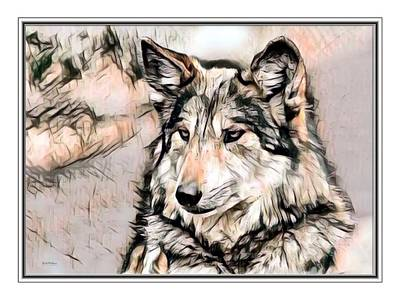 Gray Wolf Illustration Poster by Scott Wallace