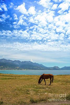 Grazing Horse At Kaikoura Poster