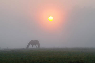 Grazing Horse In A Foggy Sunrise Poster