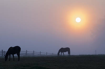 Grazing In The Fog At Sunrise Poster by Bill Cannon
