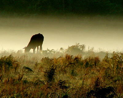 Grazing On A Misty Morning Poster