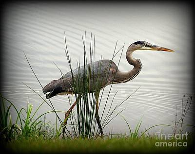 Great Blue Heron - Afternoon Walk 2 Poster