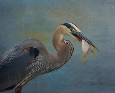 Great Blue Heron And Catch Poster