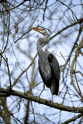 Poster featuring the photograph Great Blue Heron Nesting 2017 - 6 by Terry Elniski
