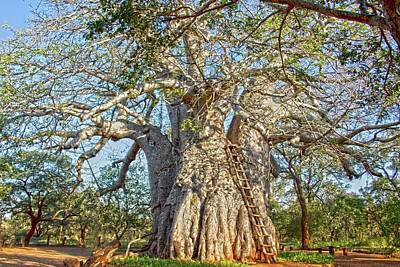 Poster featuring the photograph Great Boabab Tree by Taschja Hattingh