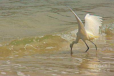 Poster featuring the photograph Great Egret 2 by Nicola Fiscarelli