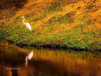 Great Egret At The Lake Poster